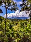 jätte- trees Royaltyfria Bilder