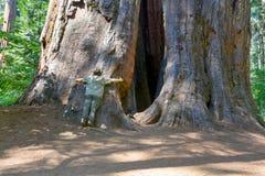 jätte- trees Arkivbilder