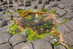 Jättevägbanken vaggar och vatten med havsväxt royaltyfria bilder