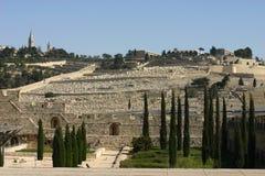 Jérusalem, le support des olives Image libre de droits
