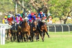 Jóquei Action da corrida de cavalos Imagens de Stock