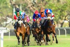 Jóquei Action da corrida de cavalos Imagem de Stock