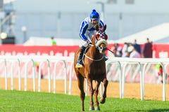 Jóquei Action da corrida de cavalos Fotografia de Stock Royalty Free