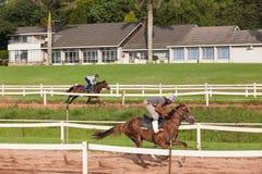 Jóquei Closeup Running Track do cavalo de raça Imagens de Stock Royalty Free