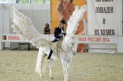 Jóquei da mulher na mostra internacional do cavalo do vestido azul Cavaleiro fêmea em um cavalo branco pegasus Asas brancas Imagens de Stock