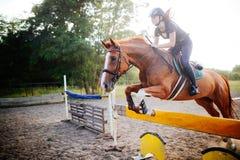 Jóquei fêmea novo no cavalo que pula sobre o obstáculo fotos de stock royalty free