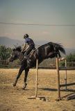 Jóquei que monta um cavalo rápido do puro-sangue Imagem de Stock Royalty Free