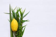Jüdisches Festival von Sukkot Traditionelle Symbole u. x28; Das vier species& x29;: Etrog, lulav, hadas, arava Lizenzfreie Stockfotos
