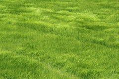 jęczmień góra śródpolna świeża zielona Obraz Stock