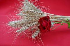 Jęczmień i czerwieni róża Zdjęcie Royalty Free