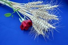 Jęczmień i czerwieni róża Obrazy Royalty Free