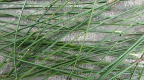 J'ai mis quelques feuilles de pin sur le béton photo stock
