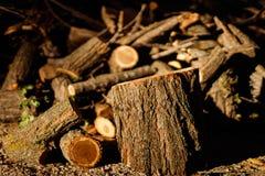 J'ai pris cette photo tout en marchant par les bois près de ma maison C'est le bois résultant de couper les branches sèches du t photos libres de droits