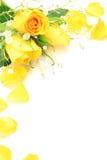 Rose de jaune et herbe de brume Photo libre de droits