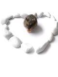 J'aime mon hamster Photographie stock libre de droits