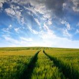 Jęczmieni pola Zdjęcie Royalty Free