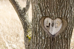 J+R Forever. J+R Heart carving in a tree Royalty Free Stock Image