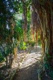 J.R. O'Neal Botanic Garden. Road Town, Tortola Royalty Free Stock Images