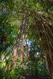 J.R. O'Neal Botanic Garden. Road Town, Tortola Royalty Free Stock Photos