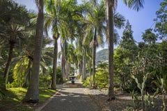 J r O'Neal Botanic Garden Wegstad, Tortola stock afbeelding