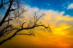 Jałowa drzewna sylwetka zdjęcia royalty free