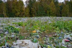 jałowa przetwarza sortuje roślina Zdjęcie Stock