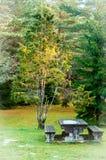 Jałowcowy drzewo i stół Zdjęcie Royalty Free