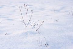 Jałowe rośliny Obrazy Royalty Free
