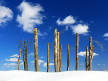 Jałowi drzewa przeciw nieba tłu Zdjęcie Royalty Free