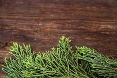 Jałowiec rozgałęzia się na drewnianym tle fotografia stock