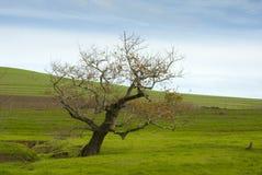 Jałowy drzewo w trawy łące obrazy royalty free