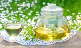 Jaśminowa herbata, jaśminów kwiaty Zdjęcia Stock