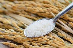 Jaśminowi ryż na łyżce nad złotem groszkują tło Fotografia Royalty Free