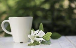 Jaśminowy kwiat północny Thailand kałuża zdjęcie stock