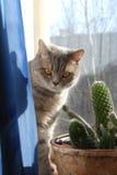 Ja, ben ik een kat Stock Foto
