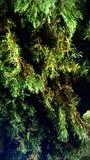Ja! Dieses ist ein zukünftiger riesiger Weihnachtsbaum Stockfotos