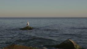 Ja jest pojawieniem seagull obsiadanie na skale wybrzeże dokąd fala miażdżył Piękna sceneria jest w harmonii zbiory wideo