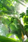 Dżungla Obraz Stock
