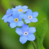 Ja kwiaty Obraz Stock