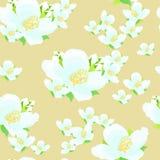 Jaśminowy kwiat ilustracyjny bezszwowy wektor Zdjęcia Stock