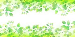 Ja opuszcza świeżego zielonego drzewnego tło Obrazy Stock
