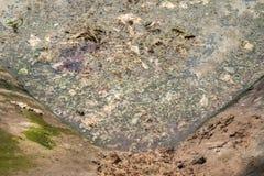 Jałowy staw i zielone algi Zdjęcia Royalty Free