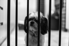 Ja ` s psa życie Fotografia Stock