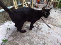 Ja w ten sposób śliczny czarny kot zdjęcia royalty free