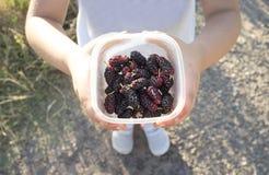 5 jaar oud meisje die de oogst van zwarte moerbeiboom tonen Royalty-vrije Stock Foto