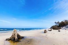 3000 jaar oude boomboomstammen op het strand na onweer Slowinski Nationaal Park, Oostzee, Polen Royalty-vrije Stock Foto's