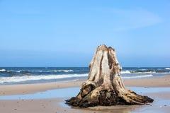 3000 jaar oude boomboomstammen op het strand na onweer Slowinski Nationaal Park, Oostzee, Polen Stock Foto's