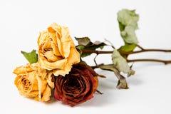 10 jaar oude rozen - droog langzaam verdwenen koninginnen van al flora stock foto's