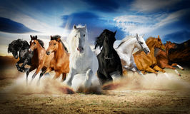 2014 jaar van paard Stock Foto's