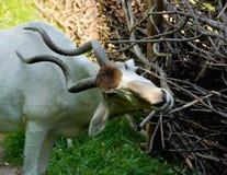 Jaat山羊 免版税库存图片